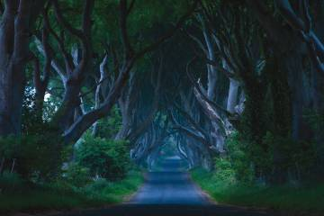 Dark Hedges 2