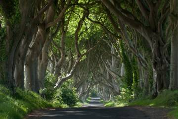 Medium Dark Hedges 1D
